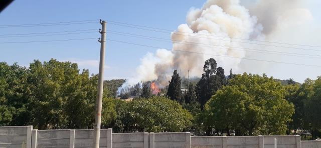 İzmir Foça'da orman yangını! Ekipler havadan ve karadan müdahale ediyor
