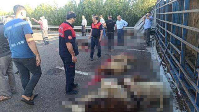 Tır devrildi; sürücü yaralandı, 42 küçükbaş hayvan telef oldu