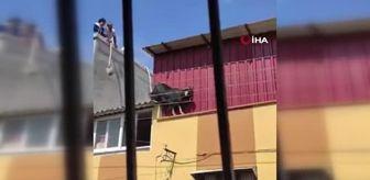 Seyhan: Kurbanlık keçi çatıdan düştü