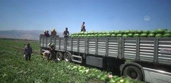 Karacabey: Karpuzdan 70 milyon lira gelir bekleniyor