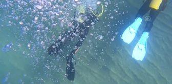 Deprem: Doğu Akdeniz'deki fay kırığı deniz canlılarına yuva oldu