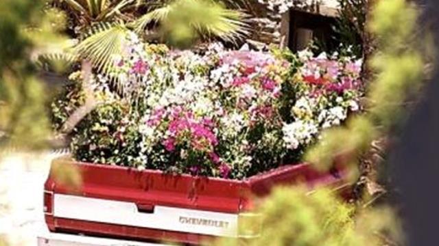 Geçtiğimiz günlerde 67. yaşına giren Sezen Aksu'ya kamyon dolu çiçek geldi