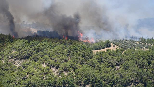 Adana ve Kütahya'daki orman yangınları kontrol altına alındı