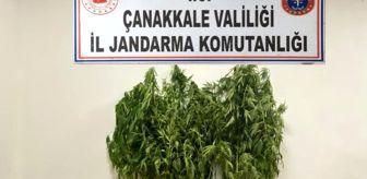 Uyuşturucu: Son Dakika   Yenice'de uyuşturucu operasyonu: 1 gözaltı