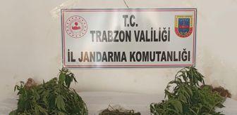 Uyuşturucu: Trabzon'da uyuşturucu ele geçirildi