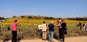 Korkuluk Festivali: KIRKLARELİ - 'Ayçiçeği ve Korkuluk Festivali' düzenlendi