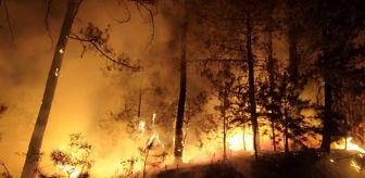 Denizli: Ormanlık alandaki yangın paniğe neden oldu