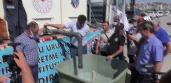 Bozkır: Konya'da 21 göl ve gölete 1 milyon 8 bin yavru sazan balığı bırakıldı