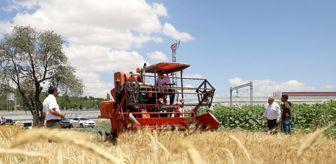 Fatih Ölmez: Nostaljik yöntemlerle hasat edildi, çiftçiye kazandırılacak