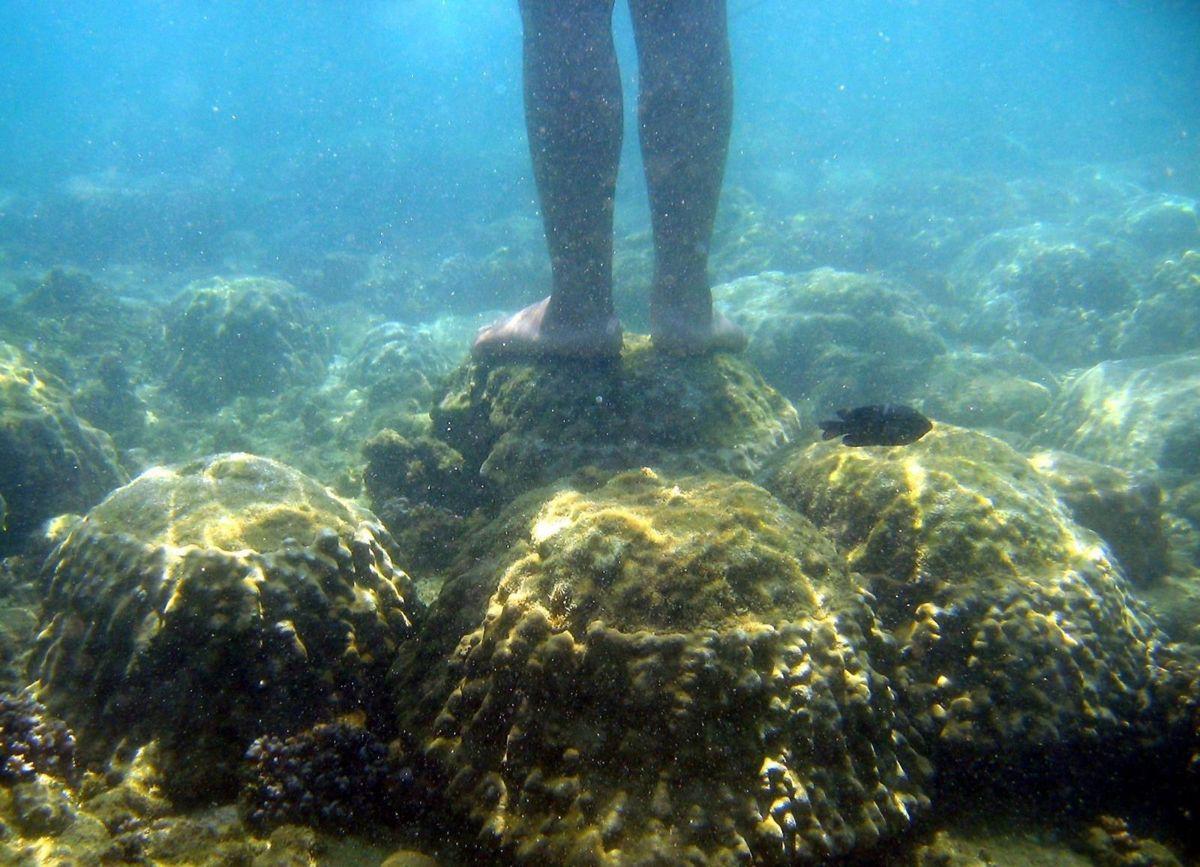 Tayland'dan mercanlara zarar veren kimyasal içerikli güneş kremlerine yasak