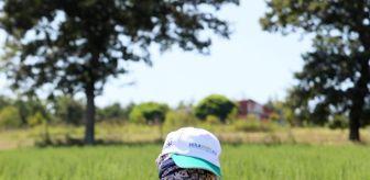 Kartepe: Kocaeli'de dikilen 2,6 milyon biberiyenin hasadına başlandı