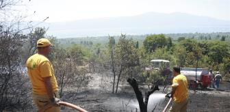 Çakırlı: Orhangazi'de ormanlık alana yakın bölgede çıkan yangın söndürüldü