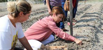 Yasin Erdem: Safran tohumları toprakla buluştu