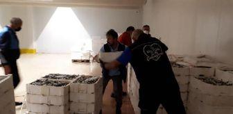 Gürpınar: Boy yasağına aykırı avlanılan 2 ton istavrit balığına el konuldu