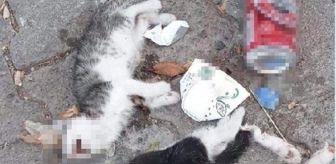 Şebinkarahisar: Son dakika: Giresun'da iki kedi yavrusu canice öldürüldü
