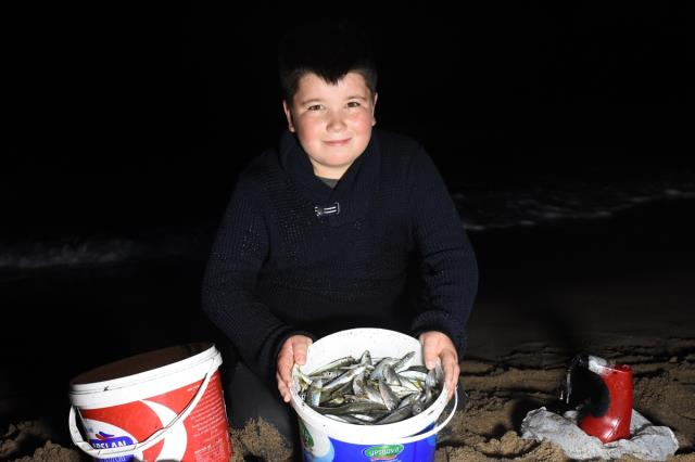 Böylesi ilk kez görülüyor! Karadeniz'de gece tonlarca balık kıyıya vurdu, 100 kilo 100 kilo topladılar