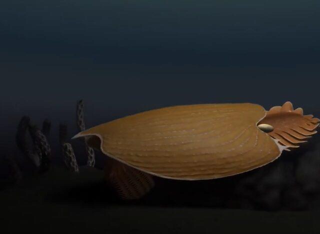 Bilim dünyası bu olayı konuşuyor! 500 milyon yıl önce yaşayan yaratığın kafası kıyıya vurdu