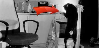 Avrupa Birliği: Mutfakta yemek arayan köpek, yangın çıkardı! Kamera anbean kaydetti