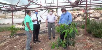 Uzak Doğu: Geleneksel ürünlerde maliyet artınca çiftçiler tropik meyvelere yöneldi