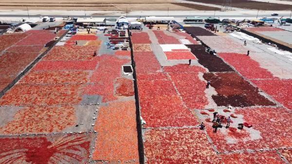 Şanlıurfa'da isot, 10 bin kişiye geçim kaynağı oldu