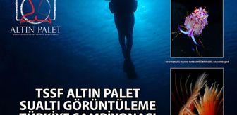 Ali Şener: TÜRKİYE ŞAMPİYONLUĞU'NU GETİREN SUALTI FOTOĞRAFLARI VE FEDERASYON KUPASI KAZANAN SUALTI VİDEOSU KAŞ'TA ÇEKİLDİ - Türkiye Sualtı Sporları Federasyonu