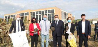 Bekir Pakdemirli: Gebze Teknik Üniversitesinin sürdürülebilir tarım çalışmasında ayçiçeği hasadı yapıldı