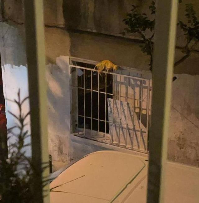 İstanbul'un göbeğinde tedirgin eden görüntü; ölü kediyi boyayıp pencereye astı