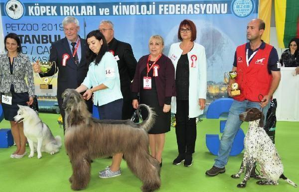 Türkiye'de pet ürünleri pazarı 1 milyar dolar sınırına yaklaştı