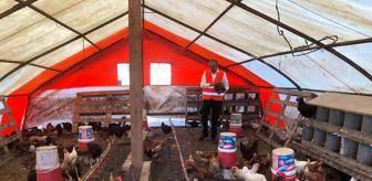 Bülent Ersoy: 55 yıllık yumurta üreticisinden sıra dışı 'müzikli' yöntem