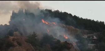 Efeler: Son dakika! Mesire alanında çıkan yangın söndürüldü