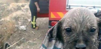Manisa Büyükşehir Belediyesi: Menfezde Mahsur Kalan 7 Yavru Köpek Kurtarıldı