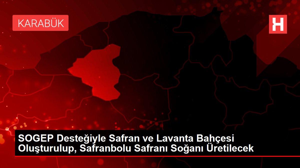 SOGEP Desteğiyle Safran ve Lavanta Bahçesi Oluşturulup, Safranbolu Safranı Soğanı Üretilecek