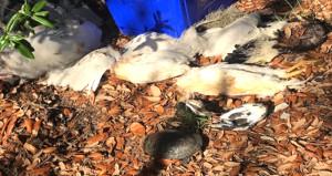 Şizofreniden kurtulmak için ayin yapıp hayvanların kafasını kestiler