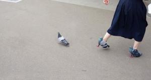Ayağındaki güvercinler sosyal medyayı çılgına döndürdü!
