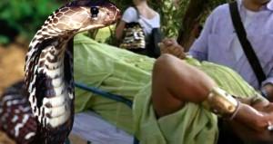 Diva'yı yılan ısırdı! Apar topar hastaneye kaldırdılar