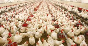 Türk gıda devinin yüzde 80'i yabancılara satıldı