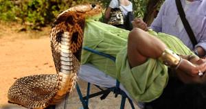Diva'yı kobra sokma görüntüleri ilk kez ortaya çıktı