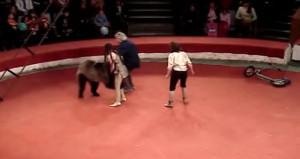 Sirkte dehşet! Sahneye çıkan ayı, seyircilerin arasına atladı