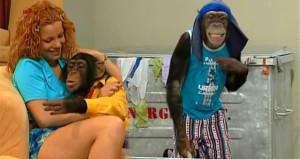 90'lı yıllara damga vuran maymun Çarli şimdi nerede
