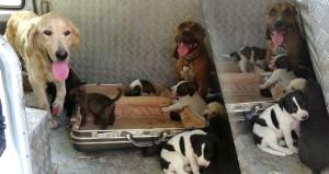 Ev sahibi şaştı, kaldı! Aylar sonra gittiği evinde 15 köpek karşıladı