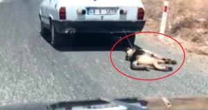 Köpeği arabasının arkasında sürükledi