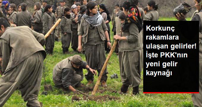 Korkunç rakamlara ulaşan gelirler! İşte PKKnın yeni gelir kaynağı