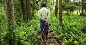 38 yıl boyunca tek başına ağaç dikerek kendi ormanını yarattı!