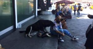 Çantasına el koyan köpeği, sucuklu simitle bile ikna edemedi