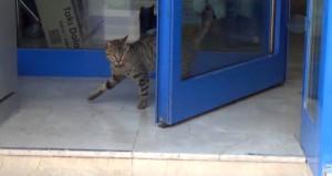 Uyanık kedi, sıcak havaya karşı çözümü bulmuş!