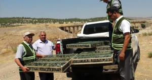 Binlerce saka kuşunu Suriye'ye kaçırmak isteyen kaçakçılar yakalandı