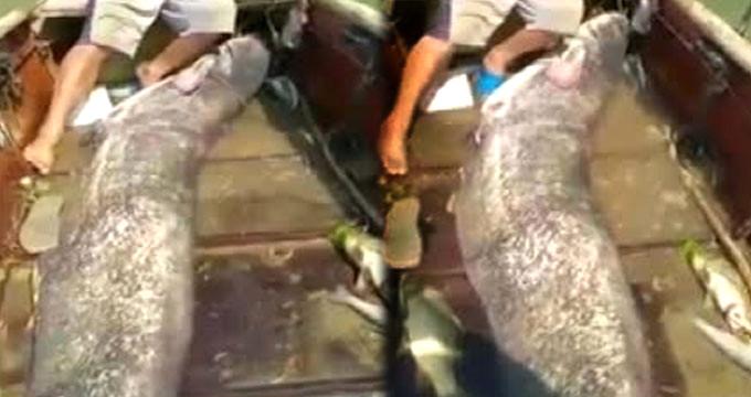 Tüm kurallara göre yayın balığı balıkçılığı