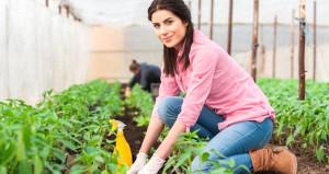 Bakan açıkladı: Tarım liseleri ve üniversiteleri kurulacak
