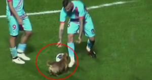 Köpek, sahaya atlayıp futbolculara nasıl top oynanacağını öğretti