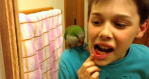 Papağan gagasıyla küçük çocuğun dişini çekti!